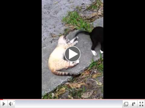 Got It! - Elvis the CH Kitty & Nala Playing