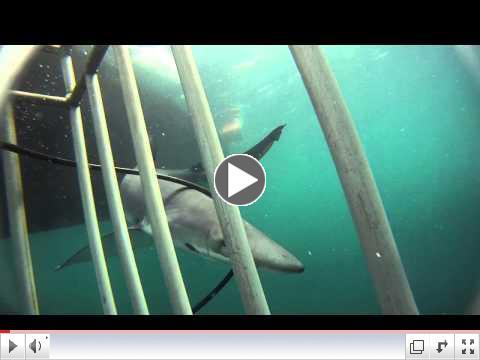 Lipsky Shark Dive!!!
