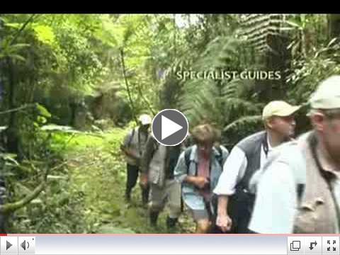 Birding paradise in the Cerulean Warbler Bird Reserve