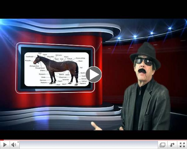 Chinese New Year !-Year of the Horse !-The Black Hole Report! with Seymore Foxhole