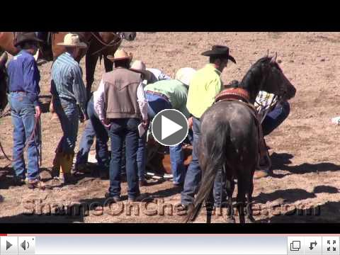 Cheyenne Rodeo Calf Brutally Injured, Suffering Ignored