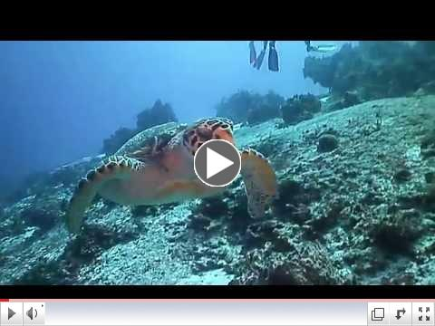 Whacked By A Hawksbill
