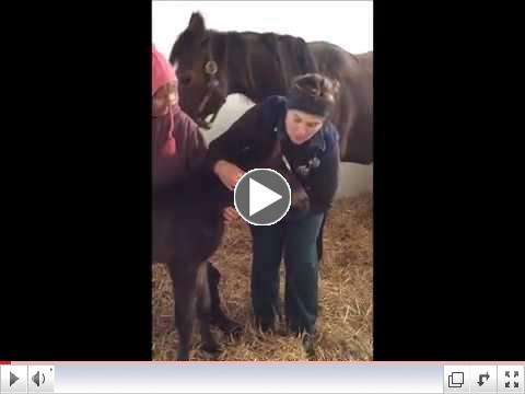Genesee Valley Equine Clinic Foals First Exam with Amy Leibeck, DVM