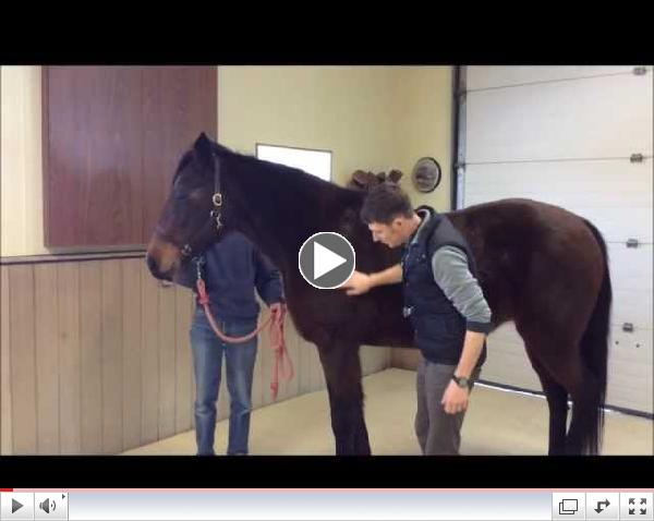 How to check your horse's vital signs with Dr. Sean Nash