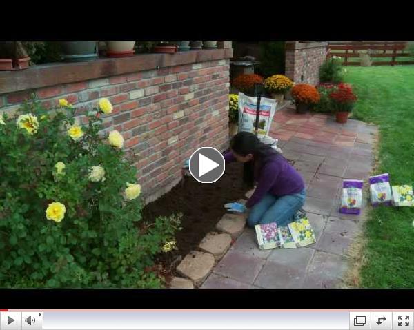 Fall Tips - Planting Bulbs