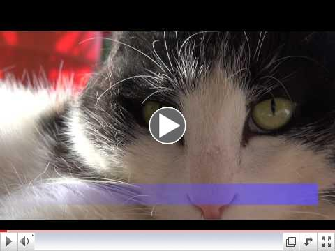 Poppie (Poppy)  the Movie - An Epic Journey Through Life - The Cat From Afghanistan