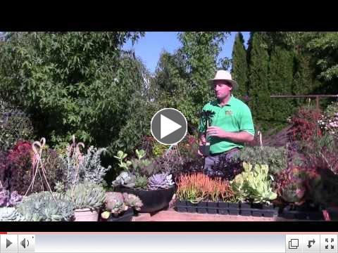 Tender Succulents: Part 3