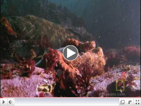 Octopus Kills Shark