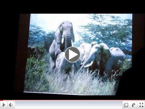 PART 2 Cynthia Moss: Celebrating Elephants 2012