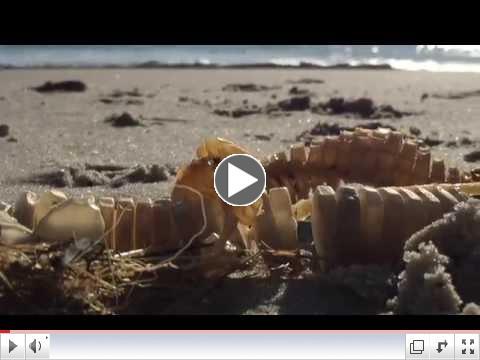 Sea Talk Video - Egg Cases