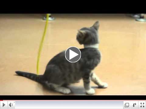 CH Kitten Liza - A308954.mov
