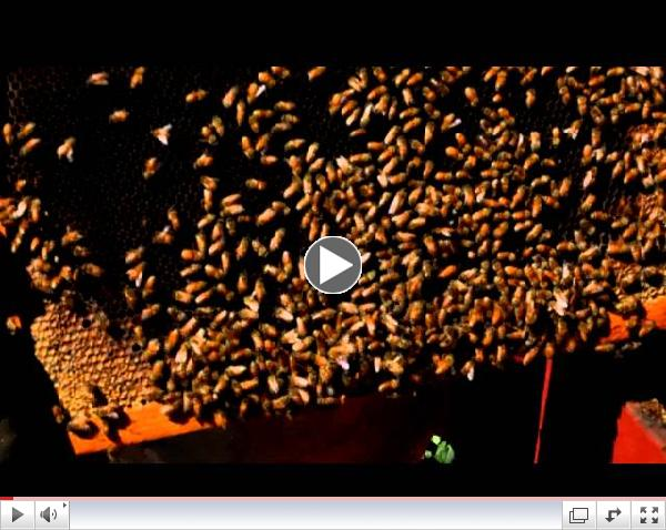 A  Gary Shilling   Beekeeper