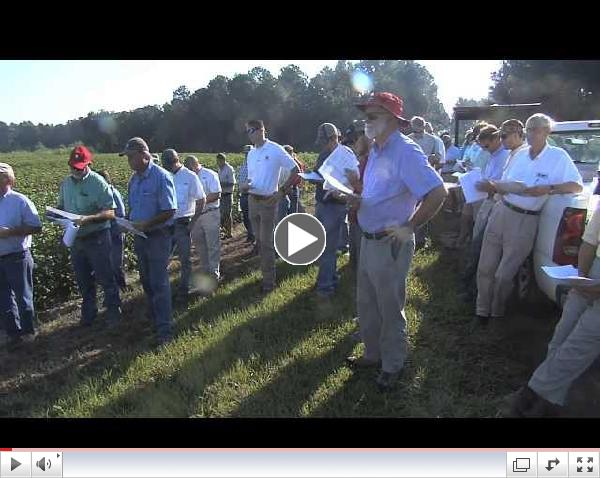 Georgia Cotton And Peanut Crops Focus Of Farm Field Day