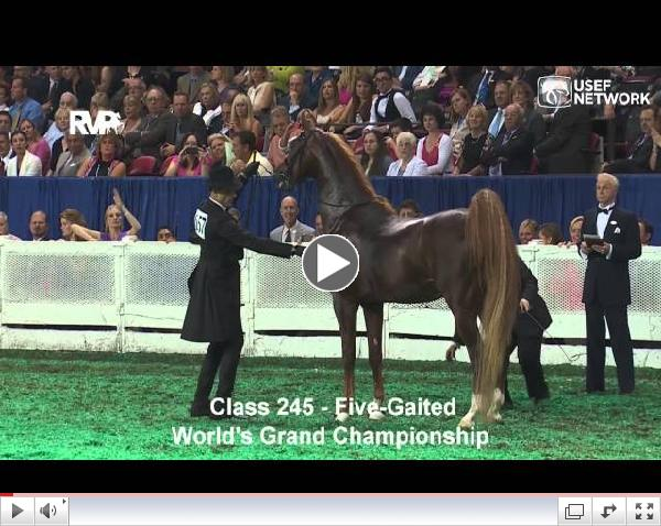 Watch: CH Callaway's Annabel Allison Wins the 5-Gaited Grand Championship at #WCHS