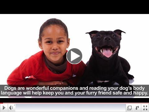 Dog Bite Prevention: Understanding Dog Body Language