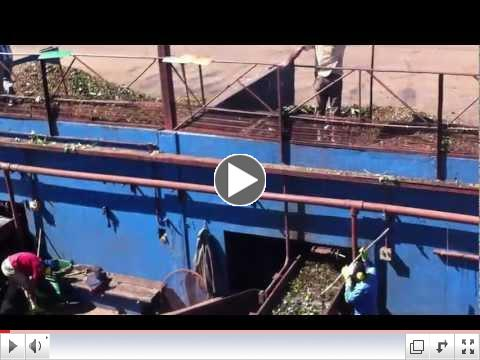 Coffee flowing from wet density separators into the pulper conveyers - Wolthers America