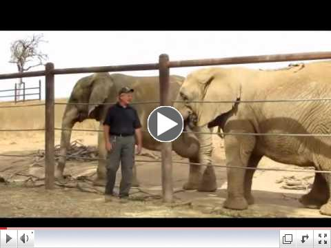 Ed Stewart Visits With PAWS' African Elephants