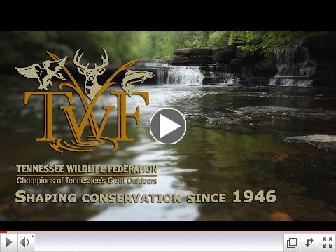 Shaping Conservation since 1946