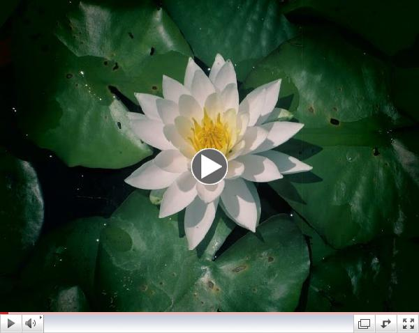 Full Moon Meditation - Trust Yourself - May 2015