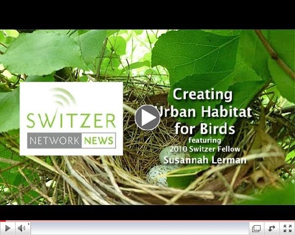 Creating Urban Habitat for Birds with Switzer Fellow Susannah Lerman