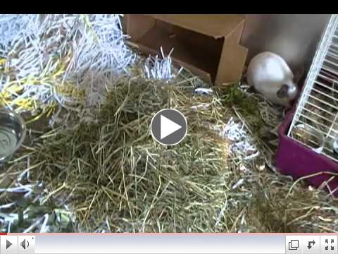 Oscar the trash can bunny now free range at Critter Camp