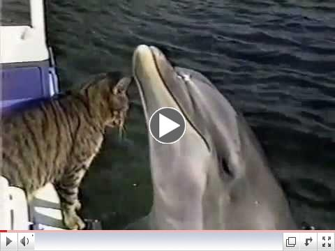 Cat And Dolphin Play Together