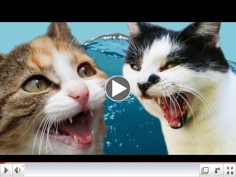 Cats Vs Water