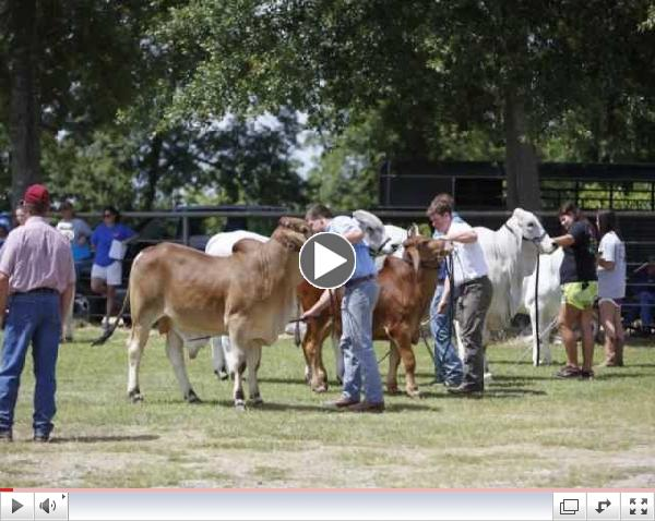 Brahman Field Day 2013