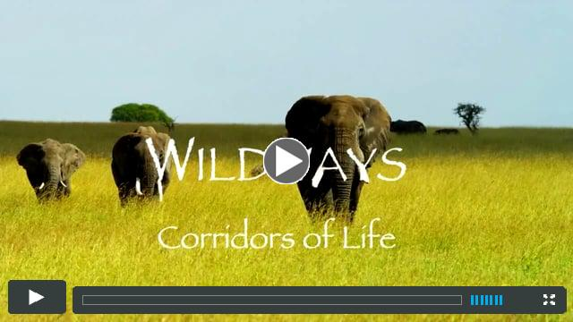 Wild Ways Trailer and Prologue