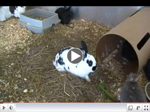 CUTE Bunnies at Critter Camp's Bunny Haven want you to VOTE!