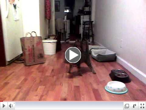 Neville and Bean_ CH Kittehs.mp4