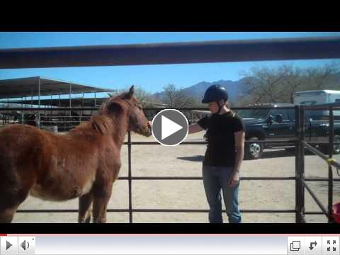 ROTH's Foals in Training, Equine Voices, AZ Day 2 - AM