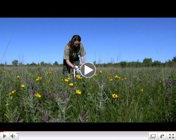 Wild Bee Surveys in Prairie-Grassland Habitats