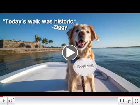 Dogs Love Florida's Historic Coast!