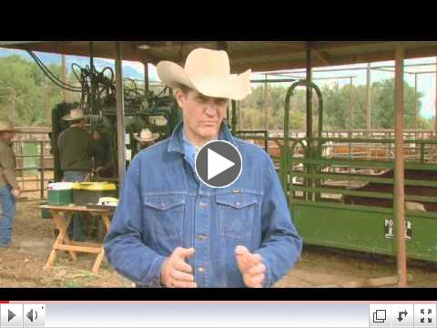 Cattle Handling Tips - Sorting