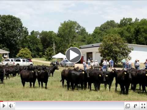 Mississippi Angus Associatin Field Day