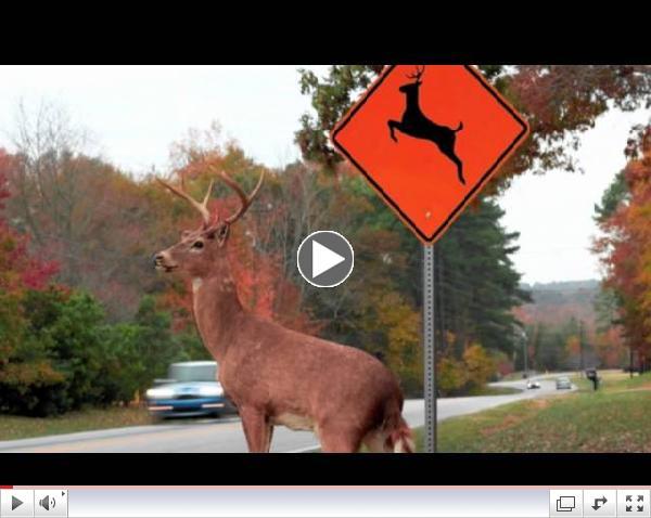 Please Move The Deer Crossing