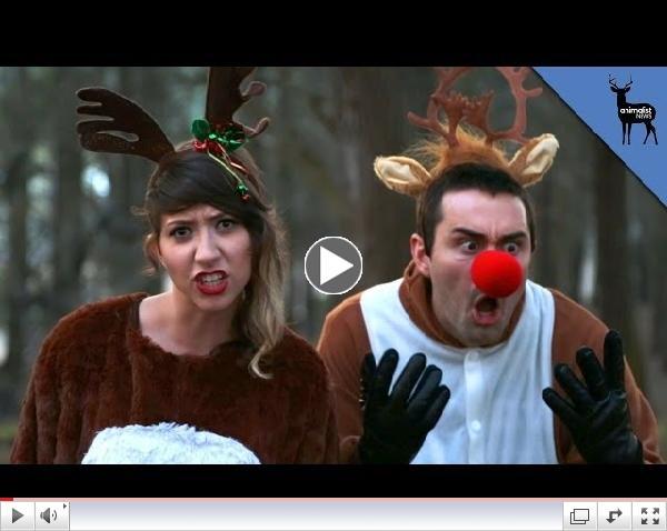 Rudolph's Gender Revealed!