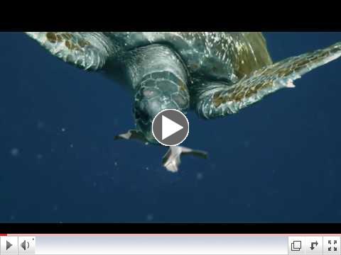 Edible Six-pack rings save sea life