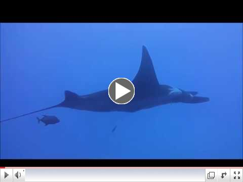 The Giant Mantas of Sirocco