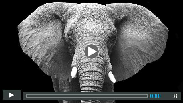 Conservation24 - Elephant Conservation PSA