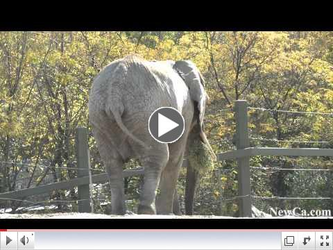NewCa.com: Toronto Zoo: African Elephants