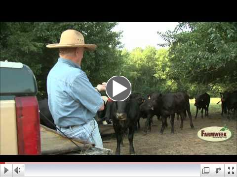 Homeplace Feeder Cattle Sale