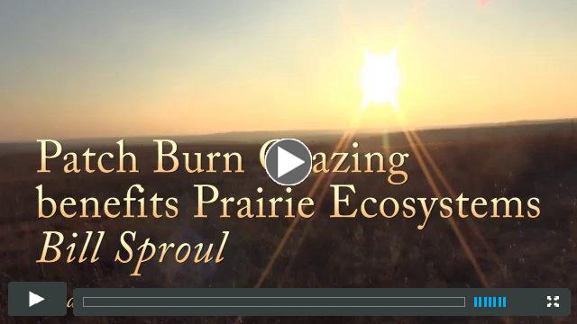 Patch burn benefits prairie ecosystems