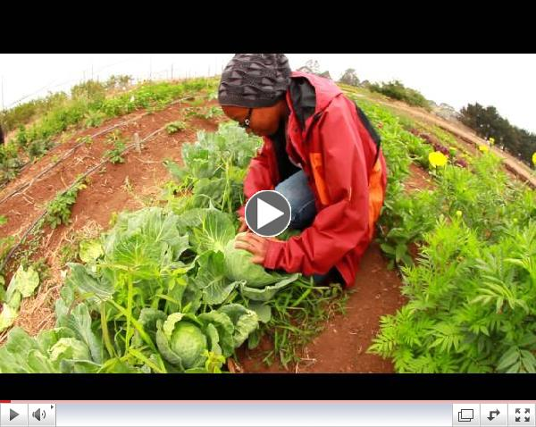 FoodWhat Youth Empowerment and Food Justice Program