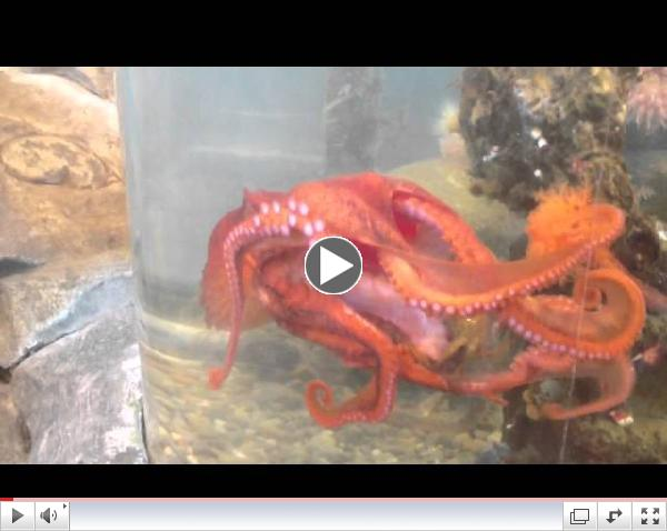 How to train your octopus