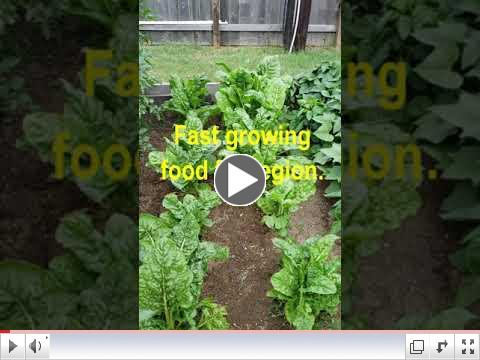 Green Thumb at 60 - Video #6 - Growing Swiss Chard