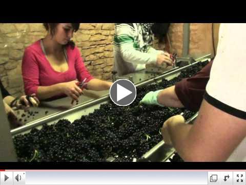 Domaine A-F GROS Harvest 2011