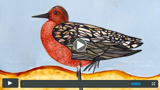 Birds of May trailer