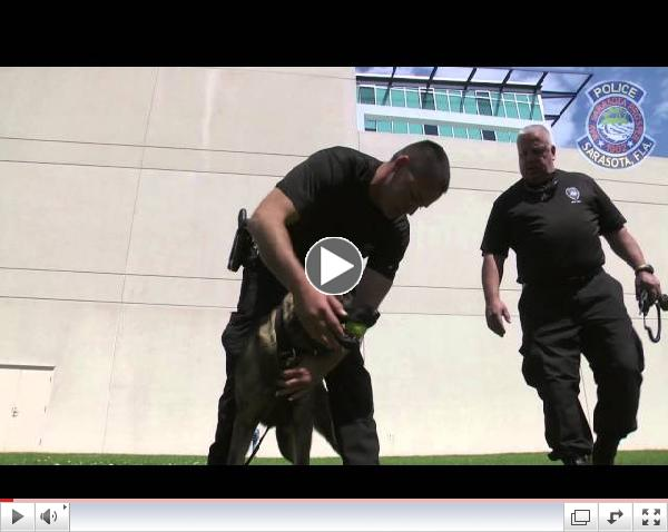 K9 Andro joins the Sarasota Police Department